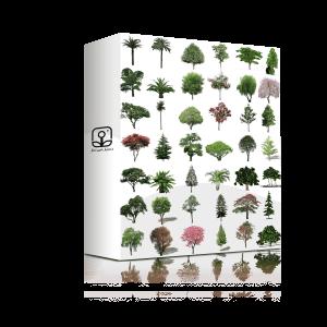 گیاهان منظرساز - مقطع-