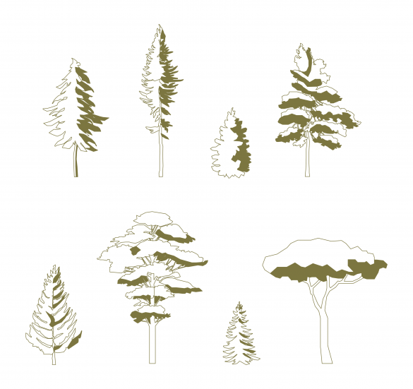 Pine tree _free pack)
